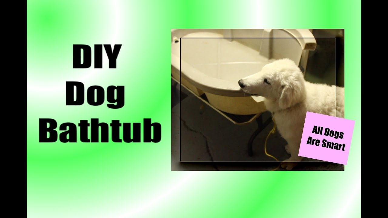 DIY Dog Bathtub   YouTube