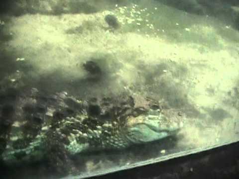 Burgers Zoo Arnheim Krokodile Niederlande Holland