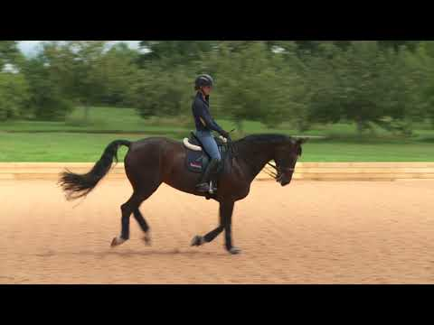 Warm-up routine for horses | Your Horse Magazine