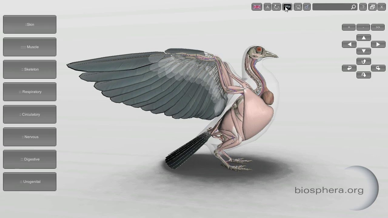 3d bird anatomy software