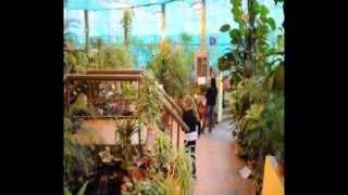 видео «Баттерфляриум» — Московский Дом Бабочек