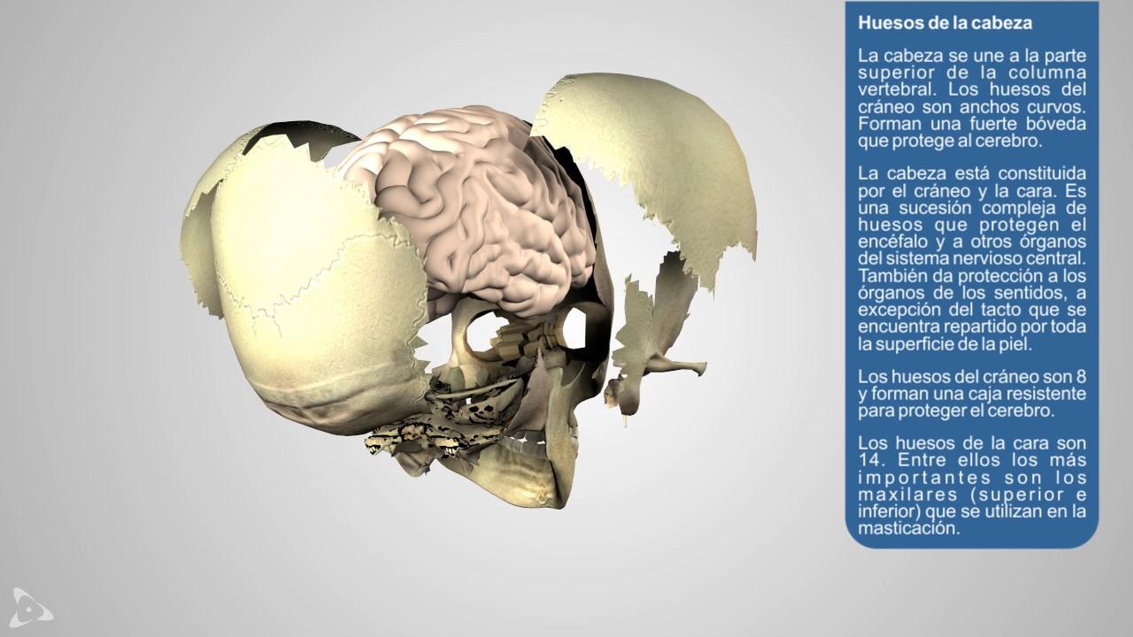 Sistema Oseo parte1 - YouTube