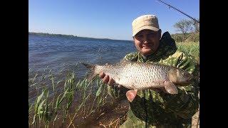 #4 Рыбалка Весенняя Ловля Голавля на Корку Хлеба. Поклевка Голавля на Фидерную Снасть. Бешеный Клев