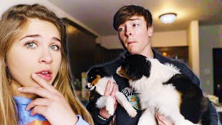 SURPRISING HIM WITH ANOTHER PUPPY!! (HE CRIED)