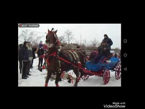 Boboteaza cailor Mihail Kogălniceanu 2016