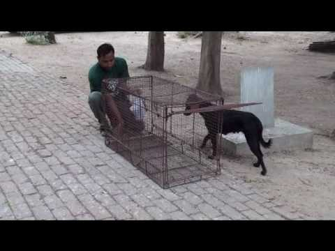 how to catch a stray dog