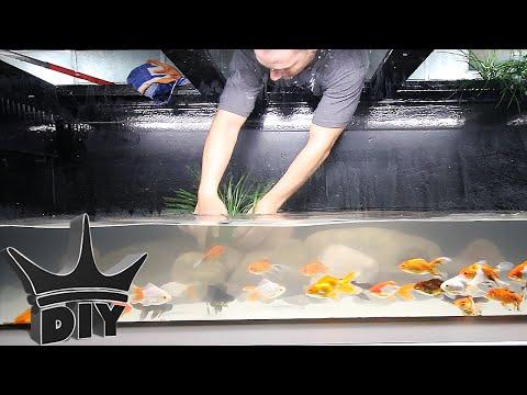 Decorating my goldfish aquarium - GOLDFISH AQUASCAPE!!