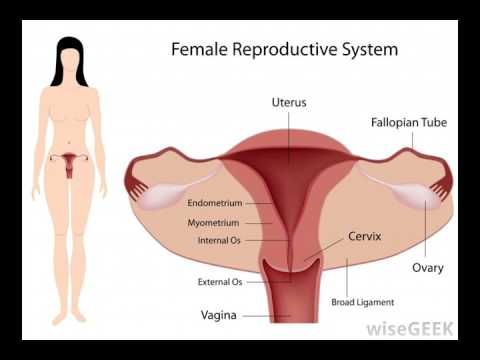 What Is A Posterior Cervix Youtube