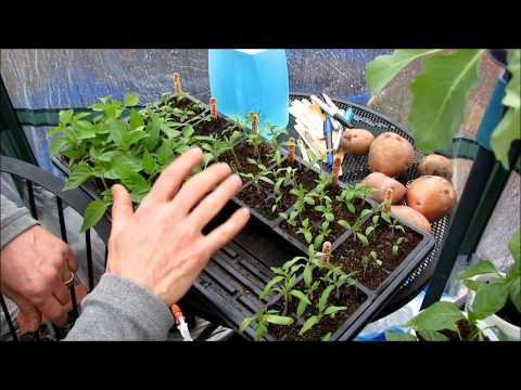 Channel Introduction The Rusted Garden 2017 Over 800 Vegetable