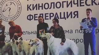 Ведущий Дмитрий Нестеров русская псовая борзая выставка Евразия 2019