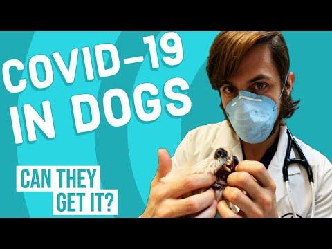 Coronavirus In Dogs | Vet Explains