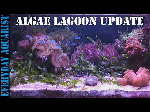 #3 Planted Marine Macro Algae Lagoon Aquarium | 8 MONTH UPDATE