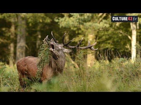 Portrait de femme :Cécile guide en haute montagne(Chamonix)de YouTube · Durée:  2 minutes 46 secondes