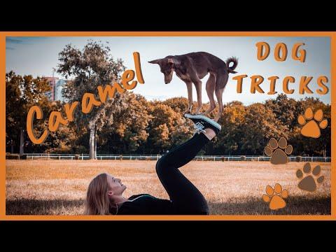 1 year old Caramel DOG TRICKS | PeruFamily