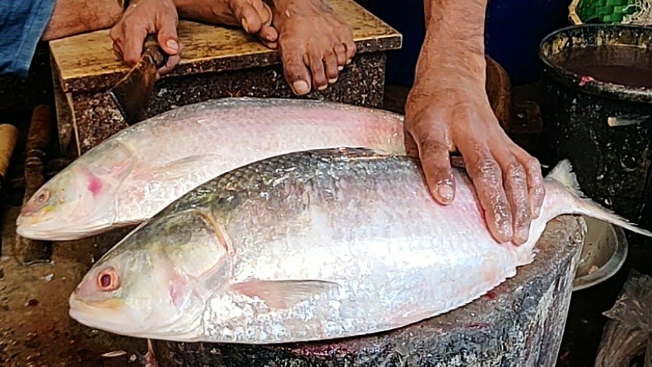 Perfect Hilsa (ilish) Fish Cutting | Fish Cutting In Bangladesh