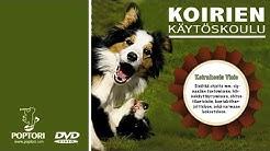 Koirien käytöskoulu  4. Rauhoittavat signaalit
