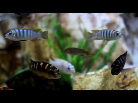 freshwater AQUARIUM fish || AQUARIUM Decoration ideas | AQUARIUM fish price