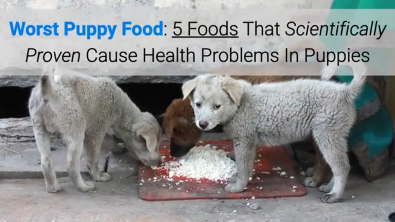 Worst Puppy Food: 5 Foods That Scientifically Proven Cause Health Problems In Puppies
