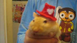 Topi's hat fashion show for gerbils Thumbnail