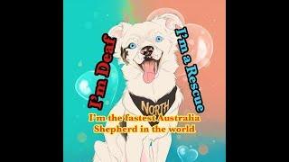 Deaf Dog North My life
