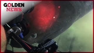 NO COMMENT : Un requin préhistorique de 8 mètres filmé au large de la Floride
