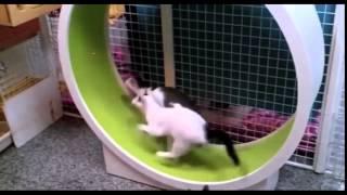 Приколы с животными собаки и кошки видео самые ржачные