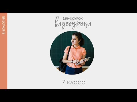 Подцарство Одноклеточные  Тип Саркодовые  Класс Саркодовые | Биология 7 класс #6 | Инфоурок