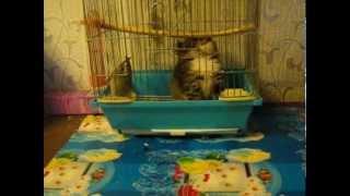 кошки и попугай