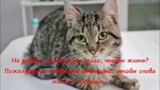 Бездомные животные: кот Сметанкин (история спасения кошек)