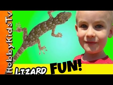 Real LIZARD FIGHT in Our Yard! Reptiles Gone Wild + HobbyFrog Watches Battle HobbyKidsTV