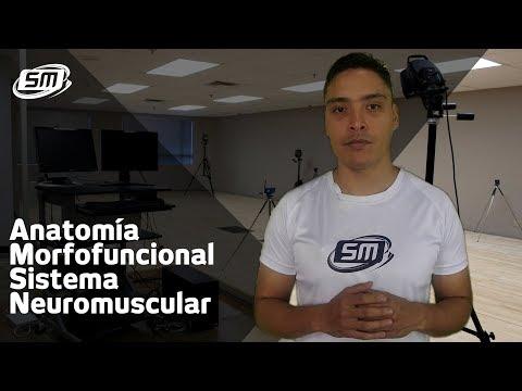 sistema-neuromuscular,-biomecánica-y-fisiología-del-ejercicio