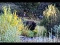 Backpacking Yellowstone's Blacktail Deer Creek Tra by Vagabloggers