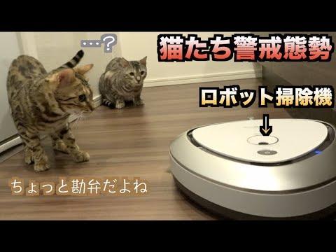 大乱闘!!10万円のロボット掃除機を動かしたらルトとロゼの反応がヤバかった!!!