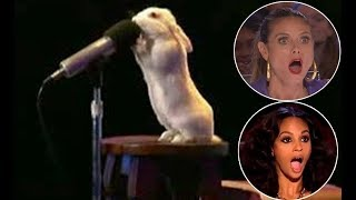दुनिया के 5 सबसे हुनरबाज़ जानवर। Top 5 Most Talented Animals in the World.