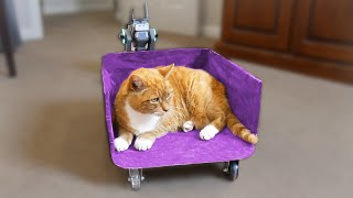 I Built a Train for My Cat