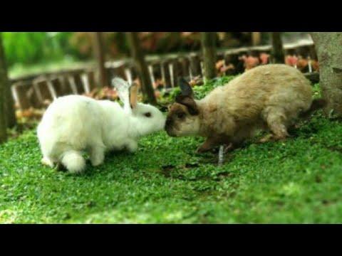 feed-the-rabbit-&-fish-at-kota-mini,-floating-market,-bandung