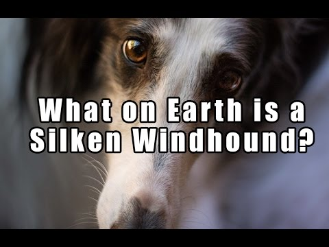 What on Earth is a Silken Windhound?