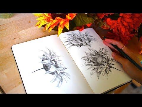 Drawing Sunflowers + Artist Rambles   Sketchbook Sunday #37