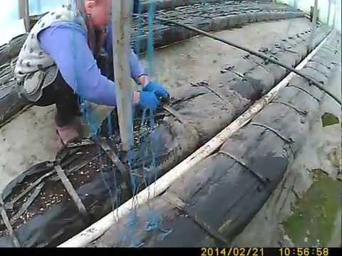 видео: подготовка теплых грядок к высадке огурца