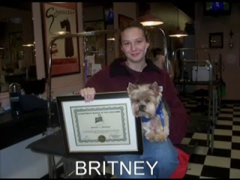 connecticut school of dog grooming -