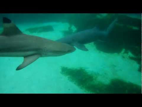 Swimming with Sharks! ~At Discovery Cove~Orlando, Fl.