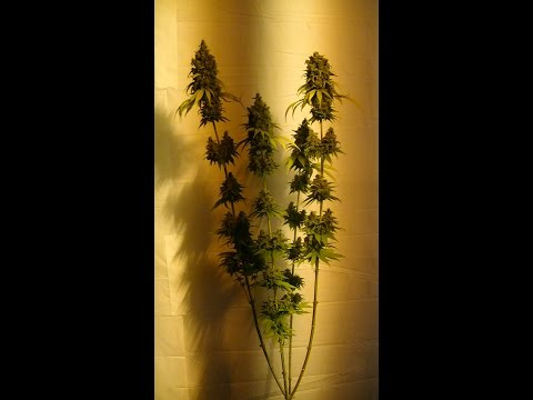 INDOOR ORGANIC CFL GROW s3 e 6:  THE FIRST FEEDING