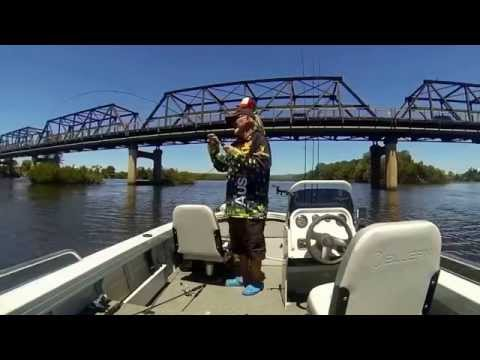 BREAM Fishing Manning River