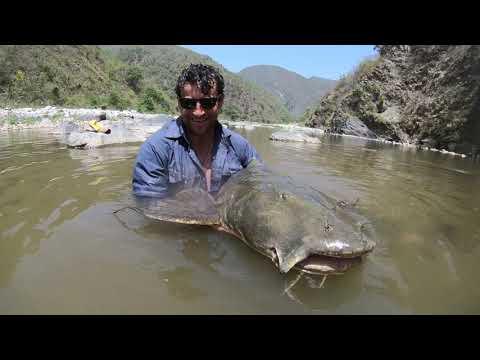 Goonch Fishing Ramganga River India - Reel Monsters Ltd