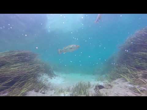 HydroSphere Deployment, Rainbow Springs, FL