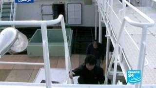 صيد سمك التونة الحمراء في اليابان