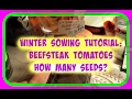 Winter sowing tomatoes tutorial how many tomato seeds to plant in winter sowing jugs mp3