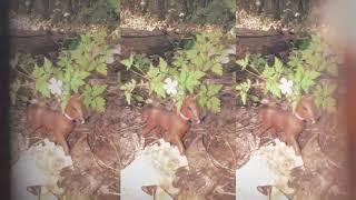 Лошади шляйх фото