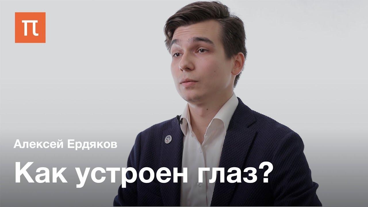 Строение и воспаления глаза — Алексей Ердяков