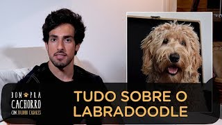 TUDO SOBRE O LABRADOODLE | JULINHO CASARES